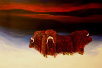 musk ox - four  - 24 x 36 inches
